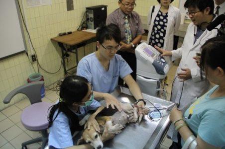 伴侶動物醫師訓練